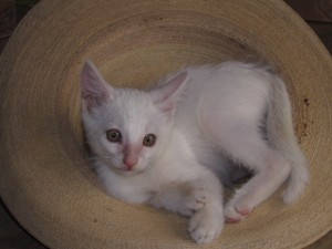 Kitten Cuate Blanco adopted in Yelapa